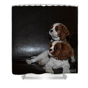 King Charles Puppies Shower Curtain by Dale Powell