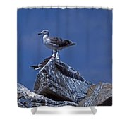 King Of The Hill Shower Curtain by Skip Willits