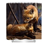 Kit Foxes Shower Curtain by Thomas Young