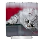 Kitten Shower Curtain by Melanie Viola