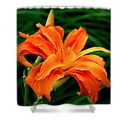 Kwanso Lily Shower Curtain by Rona Black