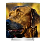 Lab Puppy At Sunset Shower Curtain by Kristina Deane