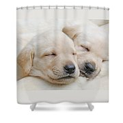 Labrador Retriever Puppies Sleeping  Shower Curtain by Jennie Marie Schell