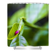 Ladybug Cup Shower Curtain by Marvin Spates