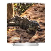 Large Iguana Shower Curtain by Dan Friend