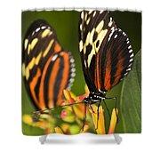 Large Tiger Butterflies Shower Curtain by Elena Elisseeva
