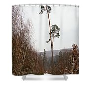 Large trees in the nature park in winter Shower Curtain by Matthias Hauser