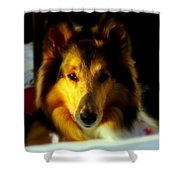 Lassie Come Home Shower Curtain by Karen Wiles