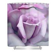 Lavender Rose Flower Portrait Shower Curtain by Jennie Marie Schell