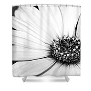 Lazy Daisy In Black And White Shower Curtain by Sabrina L Ryan