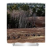 Leaving Town For The Holidays Shower Curtain by Susan Capuano