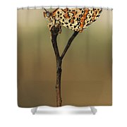 Lesser Spotted Fritillary Shower Curtain by Alon Meir