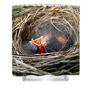Life in the Nest Shower Curtain by Christina Rollo