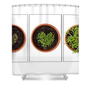 Life Of Cress On White Shower Curtain by Anne Gilbert