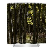 Light And  Shadows D0468 Shower Curtain by Wes and Dotty Weber