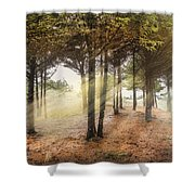 Light In The Dunes Shower Curtain by Debra and Dave Vanderlaan