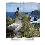 Light-mantled Albatross Sky-pointing Shower Curtain by Tui De Roy