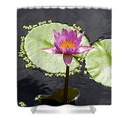 Lilly Lake Shower Curtain by Carey Chen