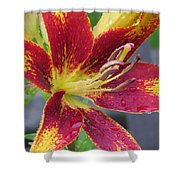 Lily In My Patio Shower Curtain by Sonali Gangane