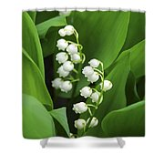 Lily-of-the-valley  Shower Curtain by Elena Elisseeva
