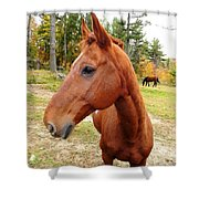 Limerick Shower Curtain by Mike Breau