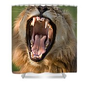 Lion Shower Curtain by Johan Swanepoel