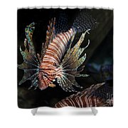Lionfish 5d24143 Shower Curtain by Wingsdomain Art and Photography