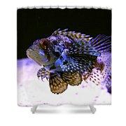 Lionfish Dendriochrius barberi Shower Curtain by Karon Melillo DeVega