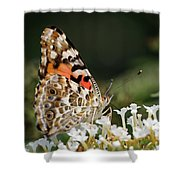 Little Creature Shower Curtain by Juergen Roth