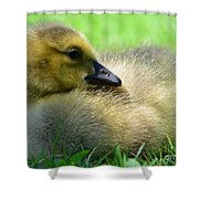 Little One Shower Curtain by Kathleen Struckle