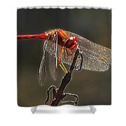 Little Red Dragon 2 Shower Curtain by Bill Caldwell -        ABeautifulSky Photography
