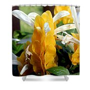 Lollipop Plant Shower Curtain by Kathy  White
