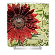 Lone Red Sunflower Shower Curtain by Kerri Mortenson