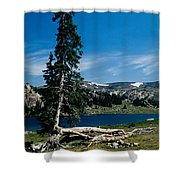 Lone Tree At Pass Shower Curtain by Kathy McClure
