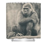 Looking So Sad Shower Curtain by Laurie Search