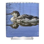 Loon On Vacation Shower Curtain by Deborah Benoit