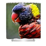 Lorikeet Bird Shower Curtain by Athena Mckinzie