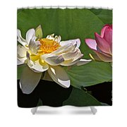 Lotus Pink -- Lotus White And Gold Shower Curtain by Byron Varvarigos