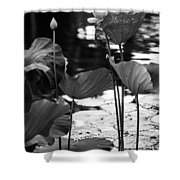 Lotuses In The Pond I. Black And White Shower Curtain by Jenny Rainbow