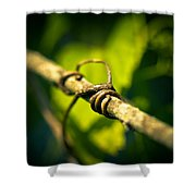 Love Takes Hold Shower Curtain by Shane Holsclaw