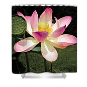Lovely Lotus Blossom Shower Curtain by Penny Lisowski