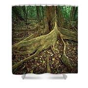 Lowland Tropical Rainforest Shower Curtain by Ferrero-Labat