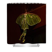 Luna At My Door Shower Curtain by Susan Capuano