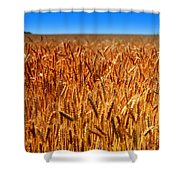Lying In The Rye Shower Curtain by Karen Wiles