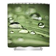 Macro Raindrops On Green Leaf Shower Curtain by Elena Elisseeva