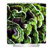 Macro Saprophyte In Green Shower Curtain by Bill Caldwell -        ABeautifulSky Photography