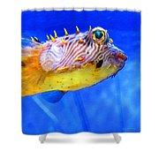 Magic Puffer - Fish Art By Sharon Cummings Shower Curtain by Sharon Cummings