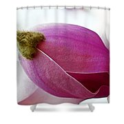 Magnolia Blossom With Cap Shower Curtain by Lisa Phillips