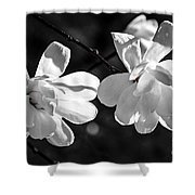 Magnolia Flowers Shower Curtain by Elena Elisseeva