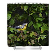 Magnolia Warbler Shower Curtain by Christina Rollo